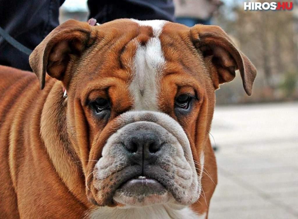 Az állatkínzás ellen demonstrált a kutyaiskola
