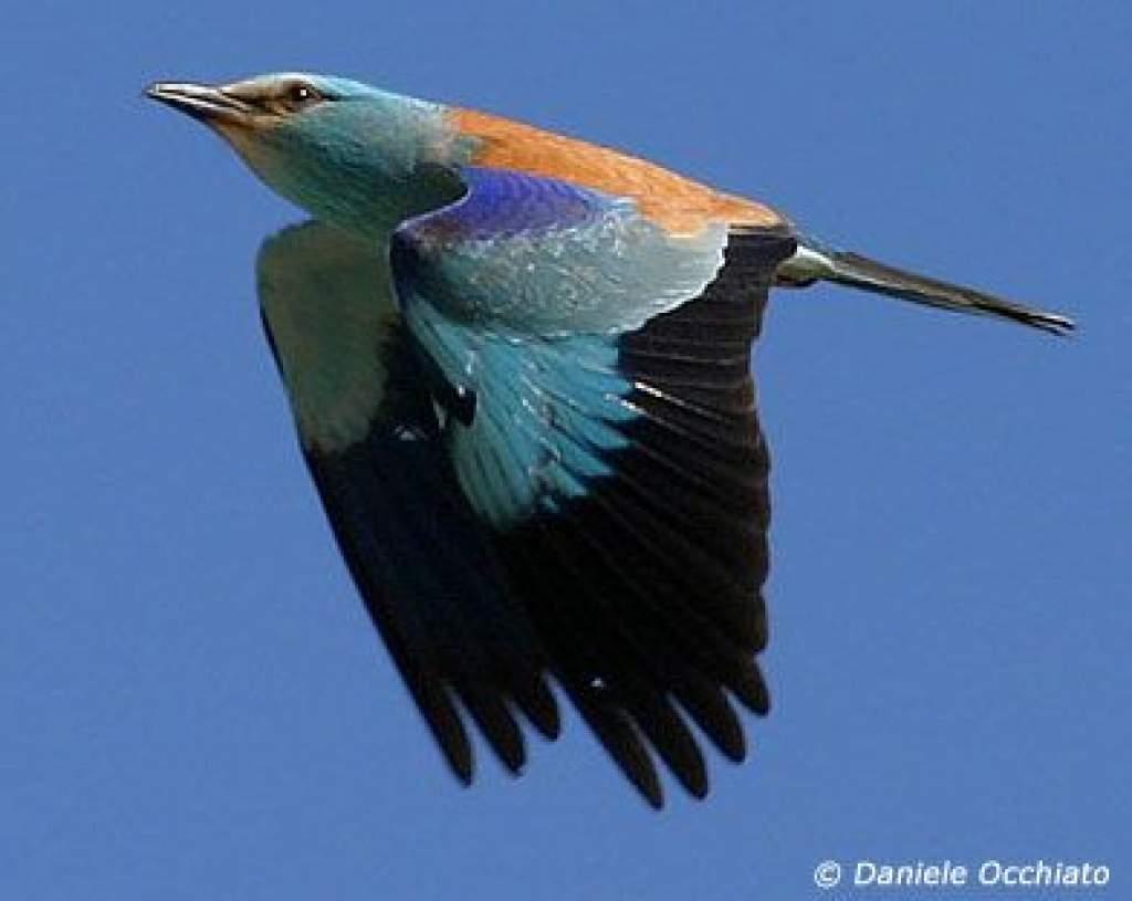Afrikában folytatódik a BirdLife International madármegfigyelő versenye