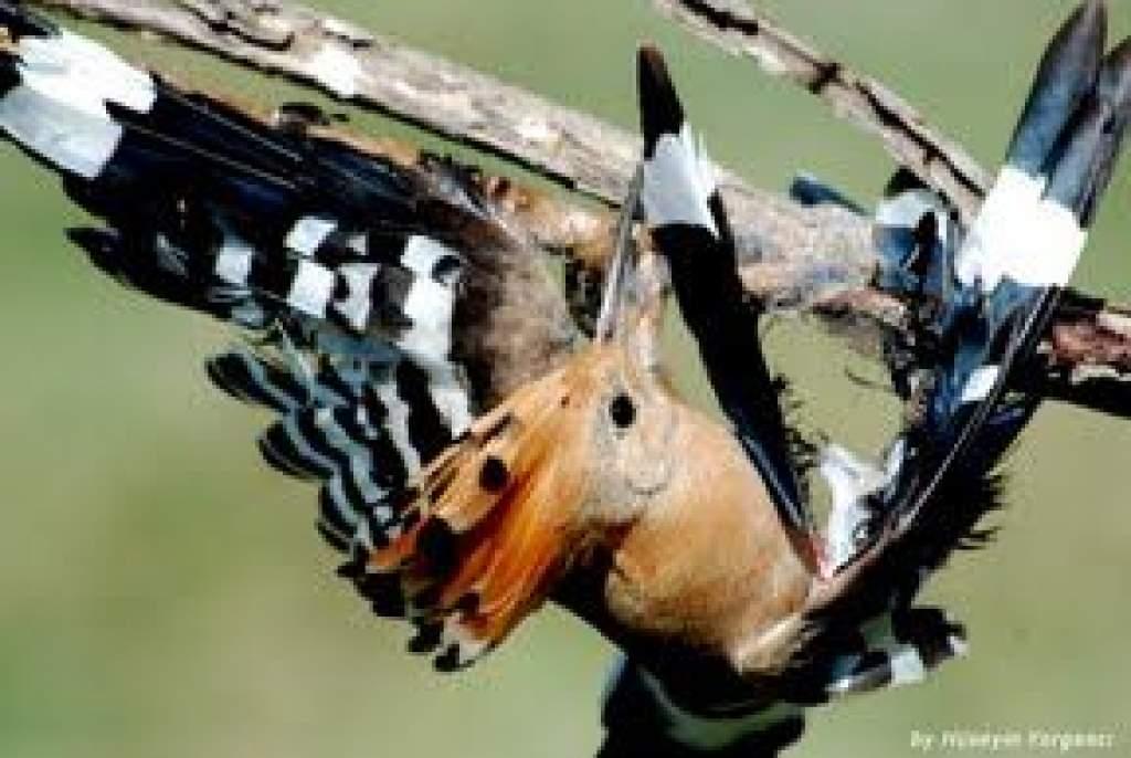 Közel fél millió madarat számoltak össze a hazai megfigyelők a hétvégén