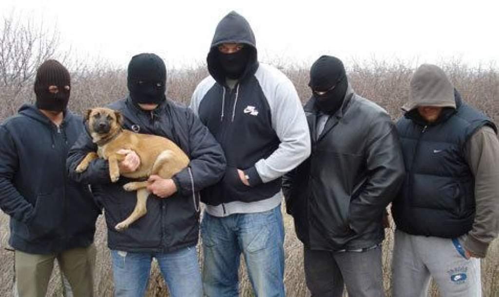 Állatvédelmi akció Kecskeméten