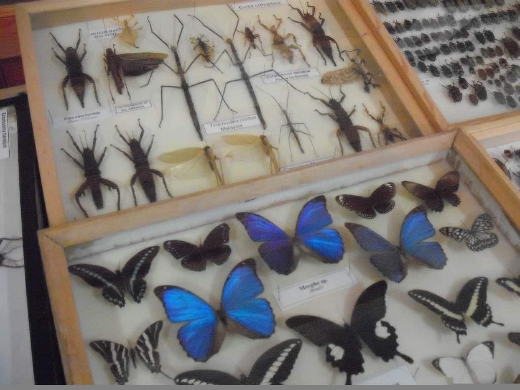 Madárpókok, lepkék és bogarak lepik el a Savoya Parkot