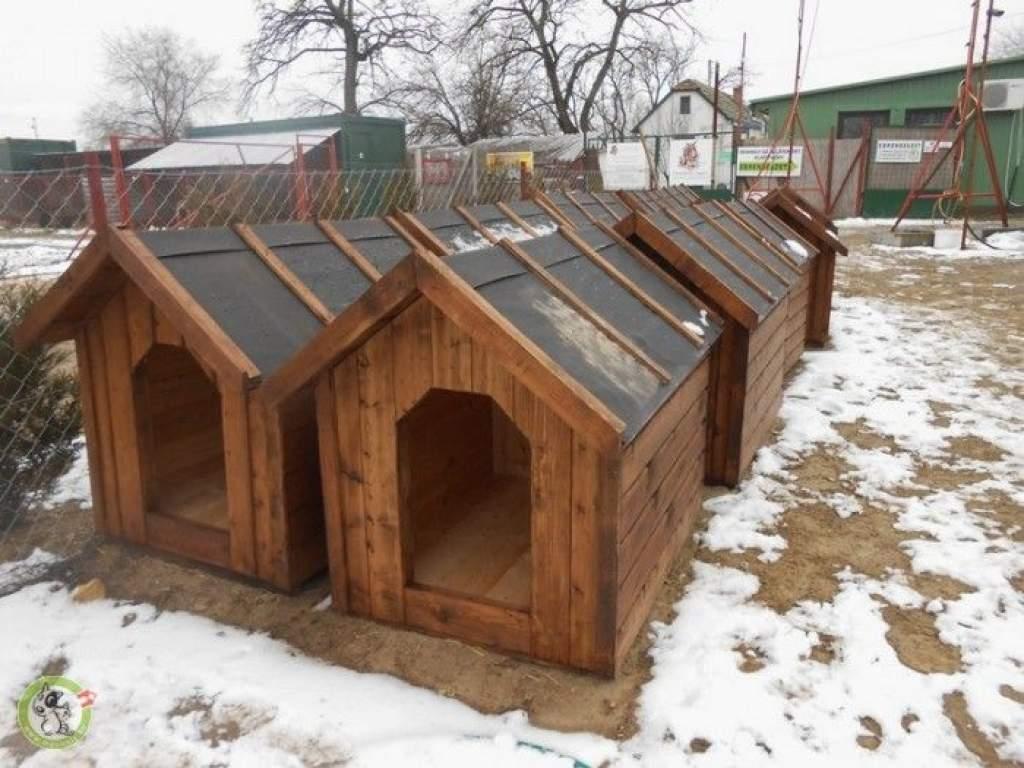 Új lakásba költözhetnek a sanyarú sorba élő kutyusok