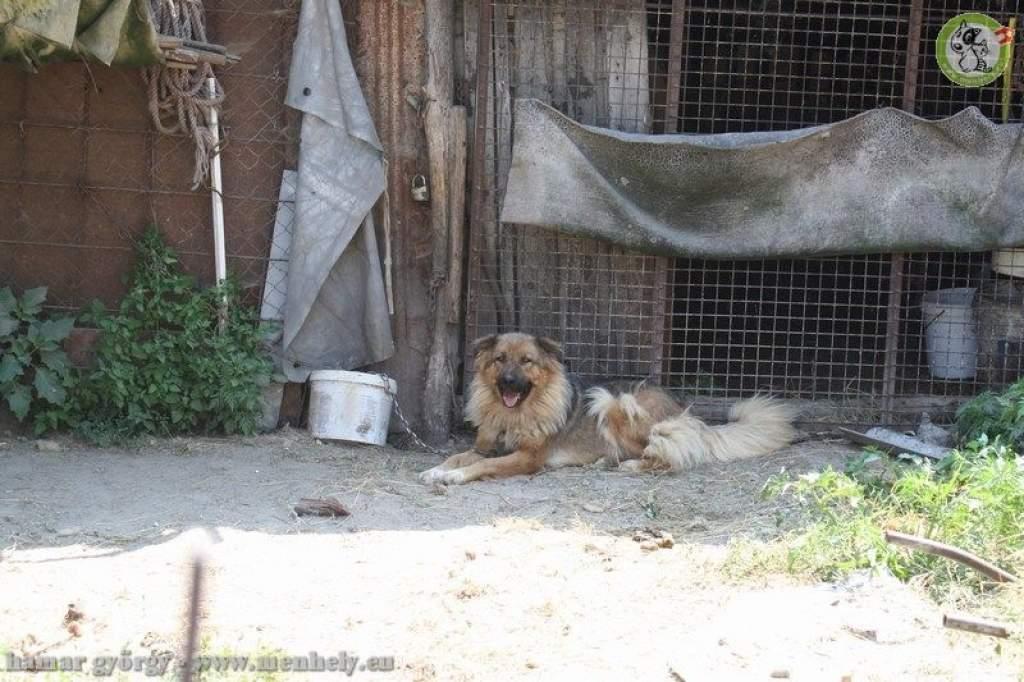 Rothadó húsokat, elhullott állati tetemeket is találtak az állatvédelmi ellenőrzés során